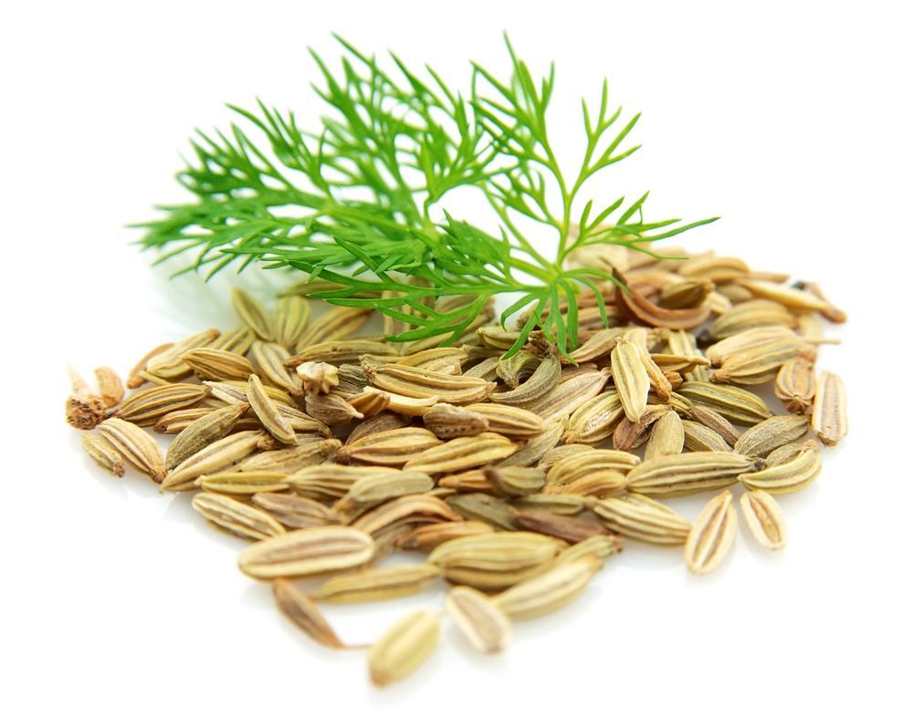 семена и трава фенхеля
