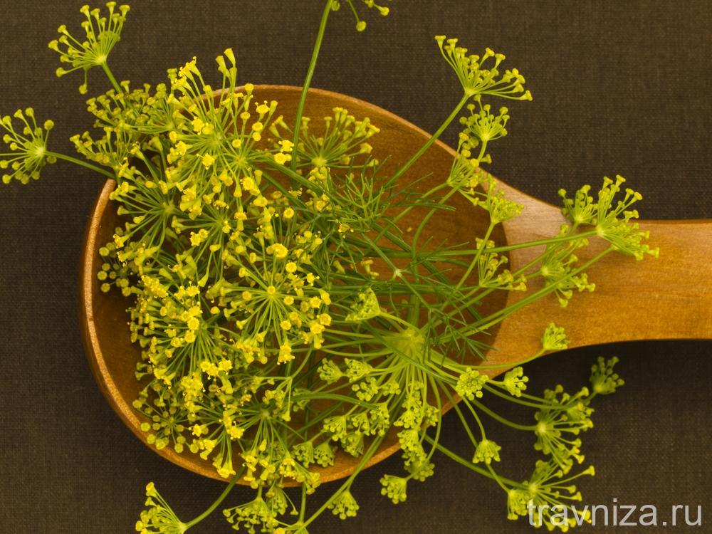 семена фенхеля
