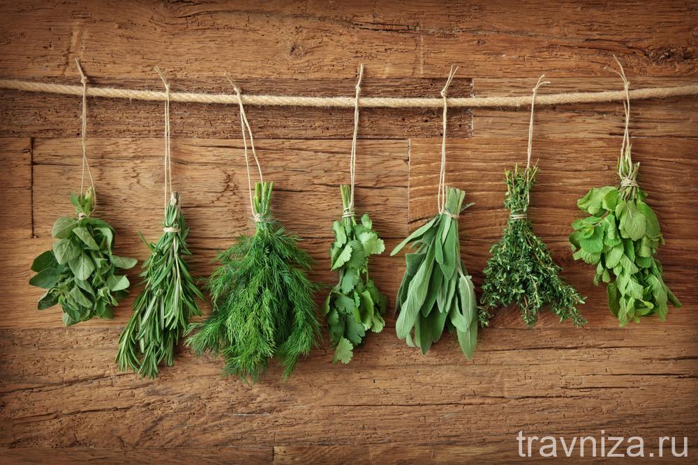 лекарственные травы на приусадебном участке