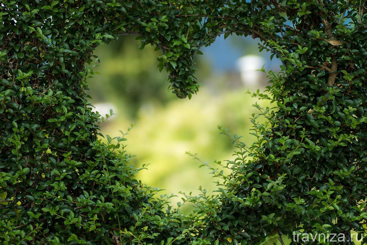 укрепление сосудов и капилляров сердца