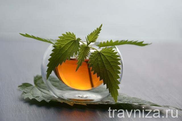 отвар и чай с крапивой