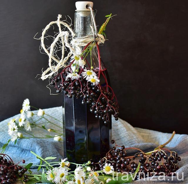 бузина черная винный настой