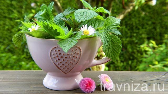 лекарственные растения ромашка и мята для ингаляций