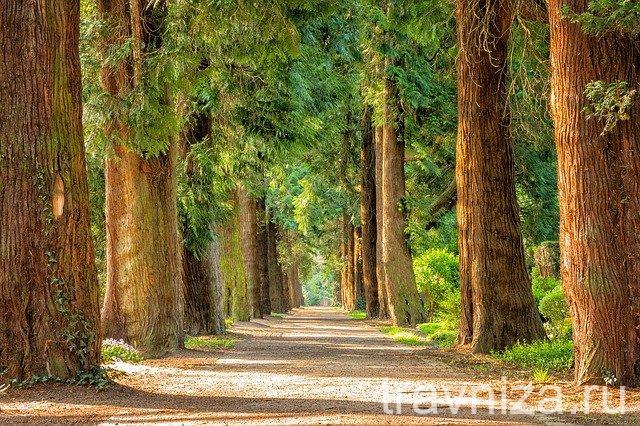 уютный лес для прогулки