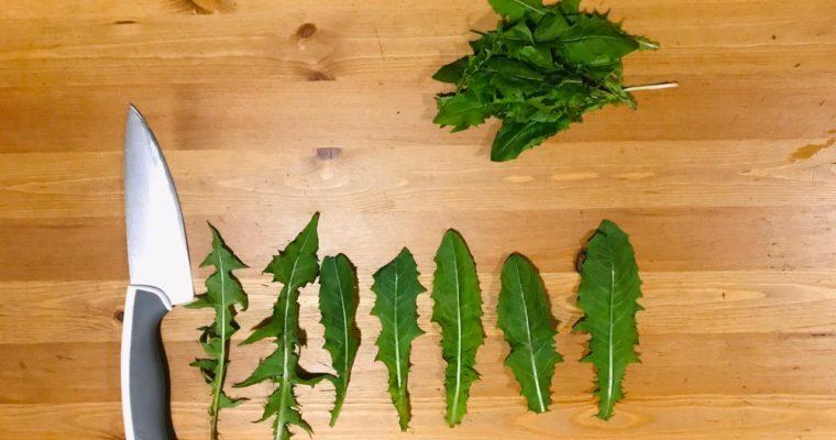 3 рецепта из зелени одуванчика — соус песто, чипсы и пряность
