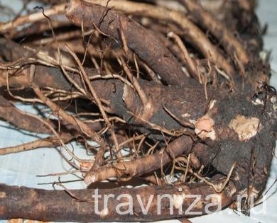 неподготовленный корень лопуха