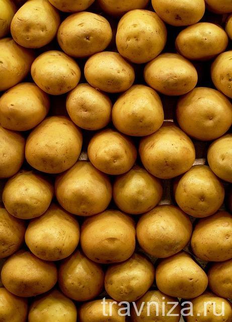 лечение картофельным соком язвы желудка противопоказания