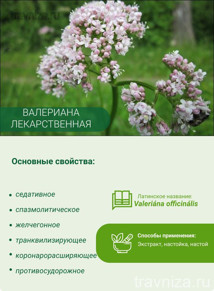 основные свойства валерианы растения