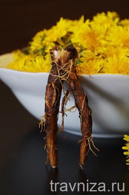 корень одуванчика обыкновенного от панкреатита