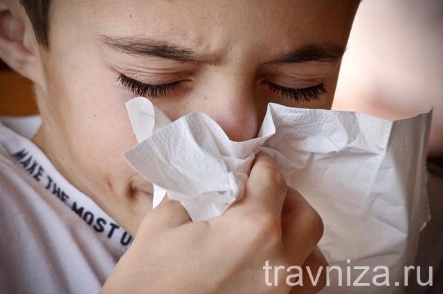 Лекарственные травы от аллергии