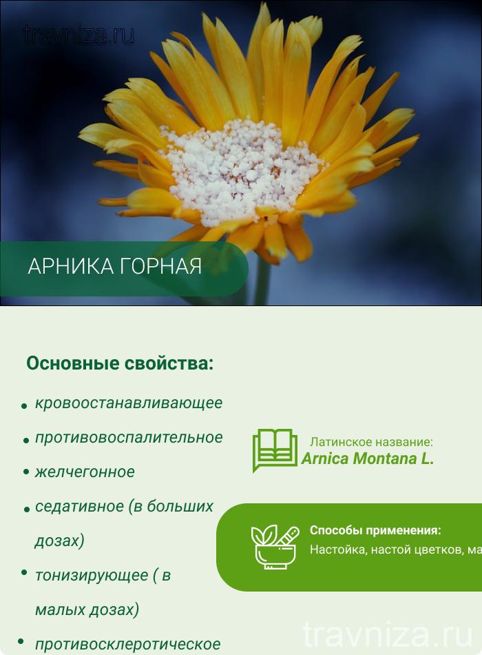 арника инфографика