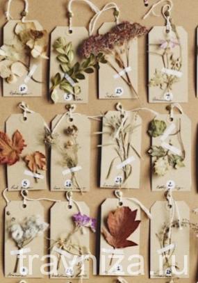 растения для дневника травника