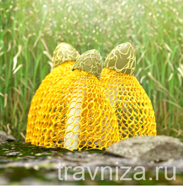 бамбуковый гриб польза