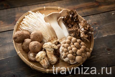 Лекарственные грибы: рейши, майтаке, шиитаке