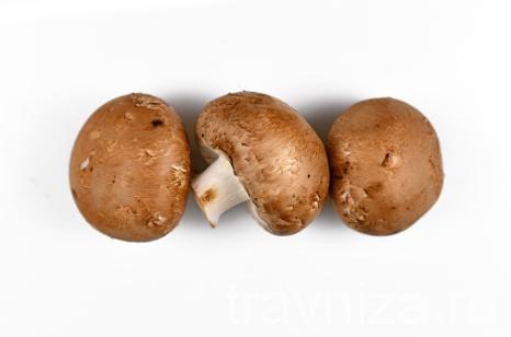 агарик гриб
