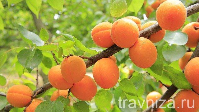польза сока из абрикосов