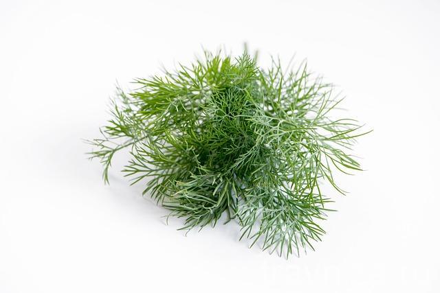 травы для дев
